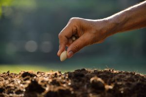 Parábolas de Jesus | O semeador saiu a semear