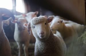 A parábola da Ovelha Perdida: tudo que você precisa saber