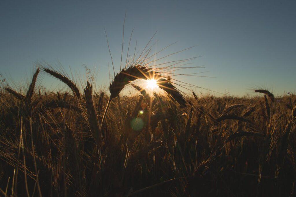 Como Receber a Provisão de Deus em Tempos Difíceis?