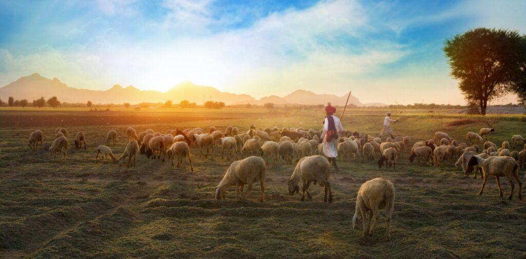 Salmo 23 da bíblia Completo em NVI